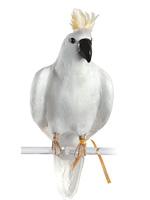 PUEBCO ArtificialBirds・オウム C