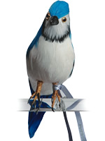PUEBCO ArtificialBirds・ブルージェイ