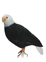 PUEBCO ArtificialBirds・ホーク S
