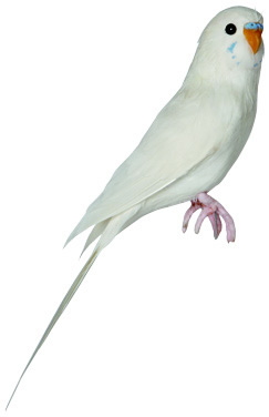 PUEBCO ArtificialBirds・インコ White