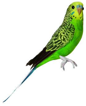 PUEBCO ArtificialBirds・インコ Green